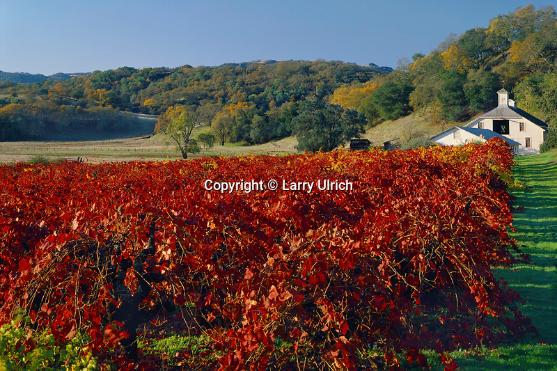 Vineyard and barn<br /> Valley of the Moon<br /> Sonoma County<br /> California