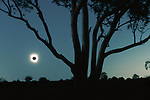 I've seen many technically excellent photographs of total eclipses over the years, but quite honestly they all look pretty much alike. So my objective was to focus on the eclipse in relation to Earth. Fortunately, this particular eclipse, witnessed from South Australia, was unique in that it occurred within an hour of sunset, providing the opportunity to frame it through gum trees. To gauge my exposure, I had to patiently wait for the eclipse to reach totality before taking a matrix meter reading on manual. Moments before, when a tiny portion of the sun was evident, the exposure was wildly brighter.