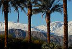 Date palms and San Jacinto Mountains, CA