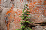 evergreen, lichens, granite wall, nature, abstract, Wild Basin, Rocky Mountain National Park, Colorado, USA