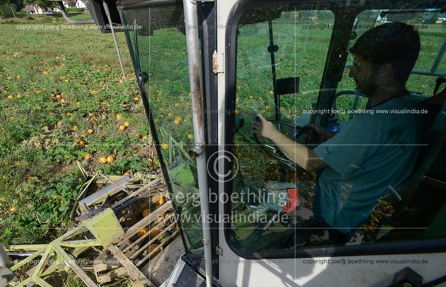 Austria Styria, cultivation of pumpkin, the seeds are used for processing of pumpkin seed oil , harvest with spezial reconstructed Claas combine harvester/ Oesterreich Steiermark, Anbau von Kuerbis und Verarbeitung zu Kuerbiskernoel, Ernte mit einem speziell umgebautem Claas Maehdrescher von Lohnunternehmer Karl Wilfing in Kopfingen
