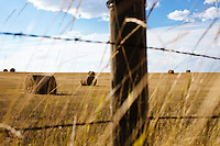 Hay bales in a farm field