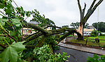 WATERBURY , CT-080420JS02—A large tree split and was blocking Congress Avenue in Waterbury as Tropical Storm Isaias tore through the region on Tuesday leaving a path of damage and many without power. <br /> Jim Shannon Republican-American