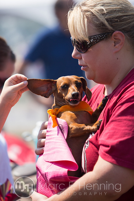 """Photo by Marc F. Henning<br /> The 7th annual """"Wiener Takes All"""" Arkansas State Championship Dachshund Races at the Bella Vista Hay Days in Bella Vista, Ark."""