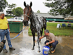 New York Post Columnist John Crudele bathes Mo's In The House, a thoroughbred in the barn of Trainer Chuck Spina (L) at Monmouth Park in Oceanport, New Jersey on Saturday July 9, 2016. Photo By Bill Denver/EQUI-PHOTO