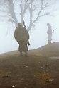 Iran 1982. Peshmergas in the fog