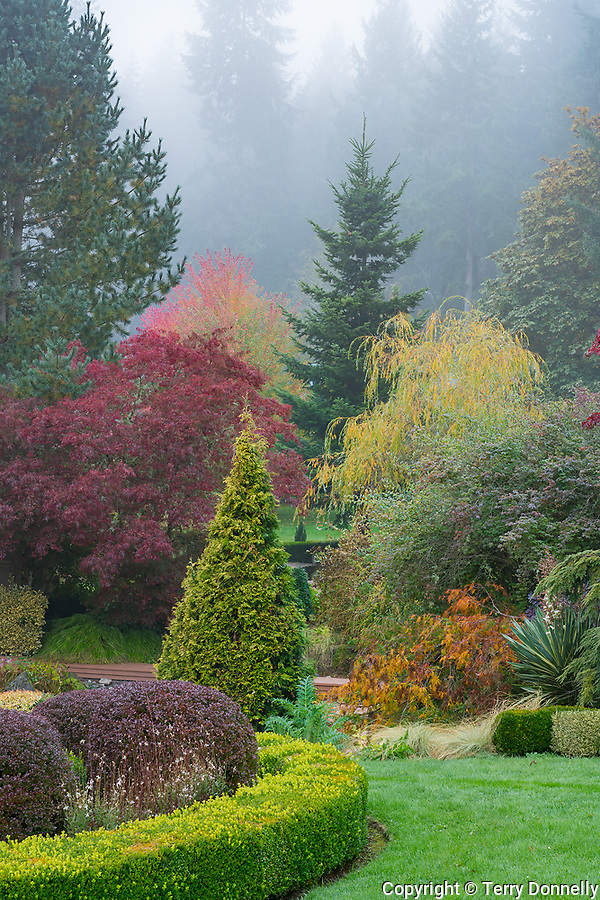 Vashon Island, Washington:<br /> Froggsong gardens, late fall in fog