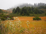 Meadow at Butano State Park