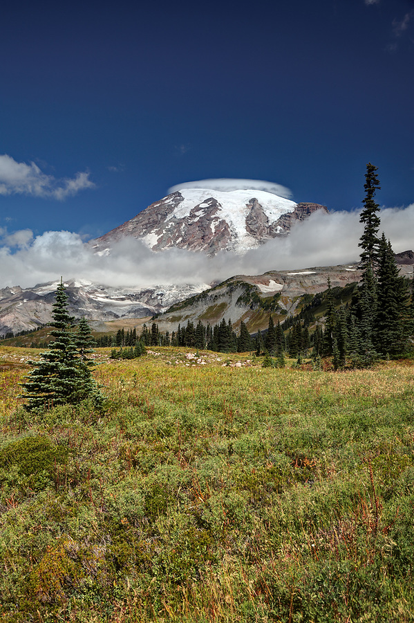 Subalpine meadow on Mazama Ridge, Mount Rainier National Park, Washington, USA