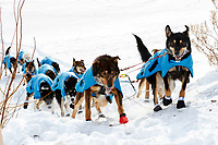 Scott Smith team works their way up the steep bank from the Yukon River into the Galena checkpoint during the 2017 Iditarod on Thursday afternoon March 9, 2017.<br /> <br /> Photo by Jeff Schultz/SchultzPhoto.com  (C) 2017  ALL RIGHTS RESERVED