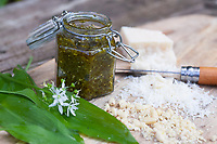 Bärlauch-Pesto, Bärlauchpesto, Pesto aus Bärlauch, Parmesankäse, Pinienkerne, Olivenöl, Frühlingspesto, Wildkräuterpesto, Bärlauch, Bär-Lauch, Allium ursinum, wild garlic, Ramsons, Wood Garlic, Wood-Garlic, ramsons, buckrams, broad-leaved garlic, L'ail des ours, ail sauvage