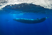 Two Fin Whales, Balaenoptera physalus, Azores, Northern Atlantic Ocean