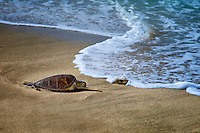 Resting sea turtle and wave. Hawaii, The Big Island