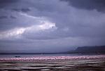 Thunderstorm and lesser flamingos.  Lake Nakuru National Park