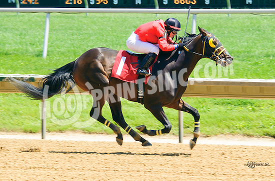 Majestic Indeed winning at Delaware Park on 6/9/16