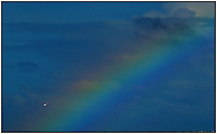A sea gull flies near a rainbow in the sky.