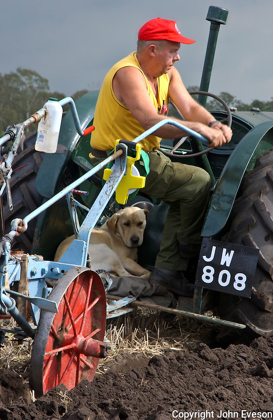 Labrador dog on a vintage tractor at Cheshire Ploughing Match.