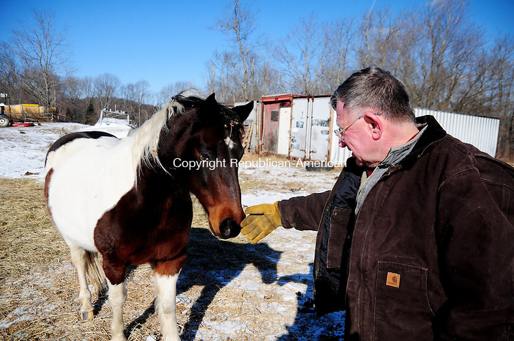 THOMASTON, CT, 26 JAN 13-012613AJ02-  David Zeigler, of Thomaston, greeds his Pinto horse Boulder at his farm off Fenn Road on Saturday.  According to the town assessor Zeigler's 8.9 acres of pasture where he keeps four horses and chickens that produce two dozen eggs a day is not a farm. He disagrees. Alec Johnson/ Republican-American