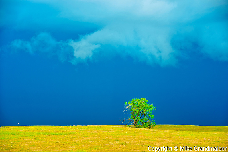COttonwood tree on prairie with stormy sky<br />Morse<br />Saskatchewan<br />Canada