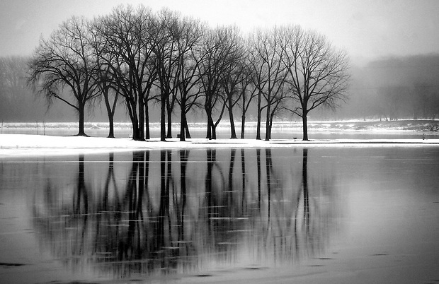 A group of trees stand amidst a placid Gray's Lake in Des Moines on Christmas Eve day, 2009.