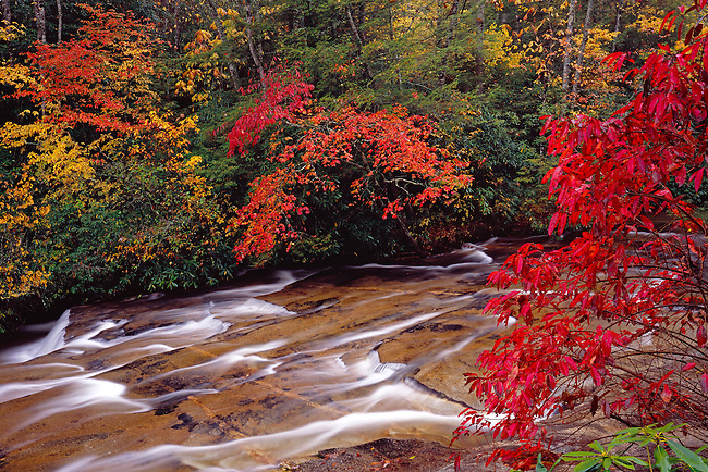 Autumn color on Looking Glass Creek, Pisgah National Forest