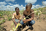 "Chrissy Biziweki (left) examines s dried up cornfield with Dingiswayo Jere in Chisatha, a village in southern Malawi on its border with Mozambique. Jere is coordinator of the ACT Alliance Malawi Forum. This village has been hard hit by drought in recent years, leading to chronic food insecurity, especially during the ""hunger season,"" when farmers are waiting for the harvest. The ACT Alliance is working with farmers in this village to switch to alternative, drought-resistant crops, such as millet, as well as using irrigation and other improved techniques to increase agricultural yields. Solar panels will power a pump that will draw water from a river into a reservoir and then into six elevated 5,000 liter tanks, which will then provide water to grow healthy crops year round."