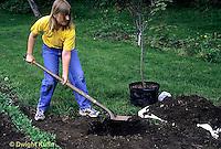TT19-047z  Planting a tree - flowering plum - Prunus spp (TT19-004e,047z,048z,050z,051z,053z,056z,059z)