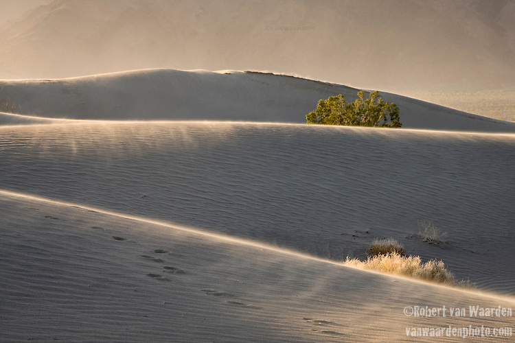 The wind rips across the Mesquite Sand Dunes - Death Valley National Park.