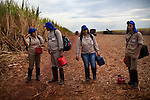 ITUMBIARA, BRAZIL - OCTOBER 16:<br /> Sugarcane field workers get ready for harvest in sugarcane fields for Cargill Sugar &amp; Ethanol Brazil, near the city of Itumbiara, in Goias state, Brazil, on Wednesday, Oct. 16, 2013. Since the US recently passed a number of regulations and standards for cars and dropped tariffs that were in place for decades against Brazilian sugar, Brazilian ethanol is now flowing to the U.S., and the ethanol industry in the country is consolidating and ramping up for a new era.