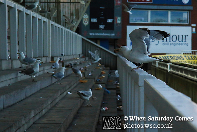 Hartlepool United 0 Sunderland 3, 20/07/2016. Victoria Park, Pre Season Friendly. Hartlepool United v Sunderland. Seagulls attracted by discarded food descend on The Town End after the game. Photo by Paul Thompson.