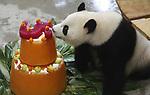 Foto: VidiPhoto<br /> <br /> RHENEN - Feest in Ouwehands Dierenpark woensdag. Beide panda&rsquo;s vierden hun vijfde verjaardag en werden getrakteerd op een meerlaagse verkoelende verjaardagstaart van ijs. Het mannetje Xing Ya is jarig op 5 augustus en het vrouwtje Wu Wen (foto) op 11 augustus. De dieren verblijven inmiddels alweer ruim een jaar in de Rhenense dierentuin. Het is niet zonder reden dat het dierenpark ervoor gekozen heeft om de verjaardagen gezamenlijk op de 8ste dag van de 8ste maand te vieren. In de Chinese cultuur is het getal 8 namelijk een geluksgetal. De Chinese uitspraak van het getal acht klinkt vergelijkbaar als het woord voor voorspoed en rijkdom.