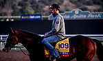 October 28, 2019 : Breeders' Cup Classic entrant War of Will, trained by Mark E. Casse, exercises in preparation for the Breeders' Cup World Championships at Santa Anita Park in Arcadia, California on October 28, 2019. John Voorhees/Eclipse Sportswire/Breeders' Cup/CSM
