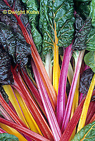 HS80-006z  Bright Lights Swiss Chard or Multicolor Chard