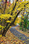 A Walking Path Framed By The Brilliant Colors Of A Rainy Autumn Day, Sharon Woods, Southwestern Ohio, USA
