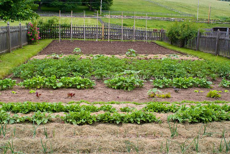 Hobby fam garden mulched plant flower stock for Large vegetable garden