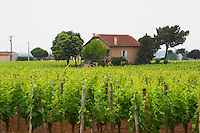 The famous and very expensive wine Chateau Le Pin comes from this vineyard and the 'chateau' is this unassuming building Pomerol Bordeaux Gironde Aquitaine France
