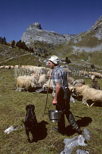 Europe/France/Aquitaine/64/Pyrénées-Atlantiques/Parc National des Pyrénées/Pic du Midi-d'Ossau: Berger, chien de berger et troupeau de brebis<br />  PHOTO D'ARCHIVES // ARCHIVAL IMAGES<br /> FRANCE 1980