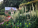 Greenhouse and garden, late June. Planting includes Verbascum chaixii 'Album',  Anthemis tinctoria 'Sauce Hollandaise', Euphorbia oblongata, Geum 'Fire Opal', Stipa gigantea.