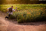 A photographer snaps images in a field of yellow and orange wildflowers near Fredericksburg, Texas, Friday, July 24, 2009. (Darren Abate/pressphotointl.com)