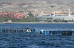 Foto: VidiPhoto..PLAYA DE LAS AMERICAS - Drijvende viskwekerijen voor de kust van Playa de las Americas op Tenerife. Tenerife is het grootste eiland van de Canarische Eilanden, een tot Spanje behorende eilandengroep in de Atlantische Oceaan, 200 km van de kust van Marokko en de Westelijke Sahara. Tenerife heeft de meeste inwoners en met ruim 1 miljoen mensen op 2057 vierkante kilometer is het het dichtstbevolkte eiland van Spanje. Het eiland is van vulkanische oorsprong. De grootste vulkaan van het eiland is El Teide, die met 3718 meter ook de hoogste berg van het grondgebied van Spanje is..