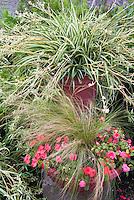 Tradescantia spider plant, annual Fiesta Salmon double impatiens, ornamental grass Nassella tenuissima in containers pots garden