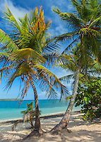 Vieques, Puerto Rico: Palm trees shade the beach on Sun Bay