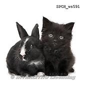 Xavier, ANIMALS, REALISTISCHE TIERE, ANIMALES REALISTICOS, FONDLESS, photos+++++,SPCHWS591,#A#
