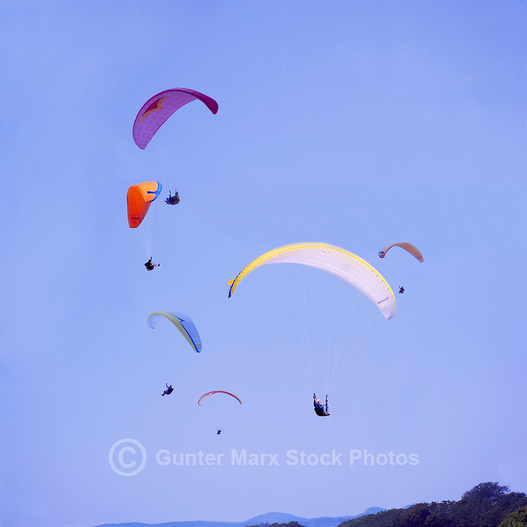 A Group of Paragliders paragliding at Clover Point, Victoria, Vancouver Island, British Columbia, Canada, in Summer