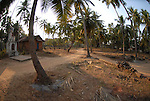 Rural scene near Candolim in Goa in India.