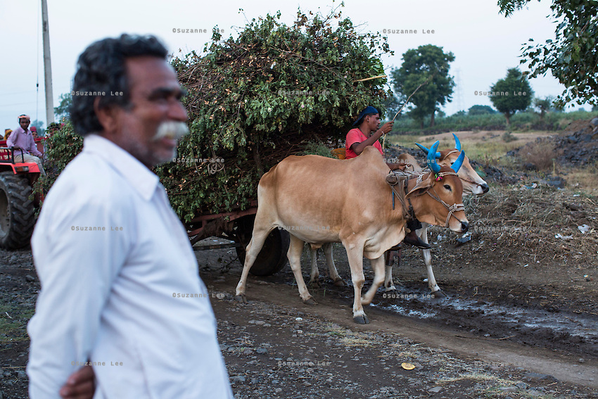 A bullock cart brings fodder to the village in Karhi, Khargone, Madhya Pradesh, India on 12 November 2014. Photo by Suzanne Lee for Fairtrade