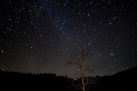 A lone tree against the starry sky at Steel Creek Campground on the Buffalo National River in Arkansas.