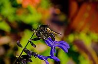 Bumble Bee at Wegerzyn Garden