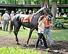 Queenie's Song before The Christiana Stakes at Delaware Park on 7/9/14