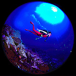 Diver Sally Herschorn glides down the dropoff over the coral reefs of Grand Cayman Island. Mandatory credit: Ed Wolfstein<br /> <br /> Original slide or high resolution scan available for licensing.